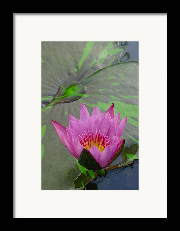 Lotus Framed Print featuring the photograph Lotus Blossom by Suzanne Gaff