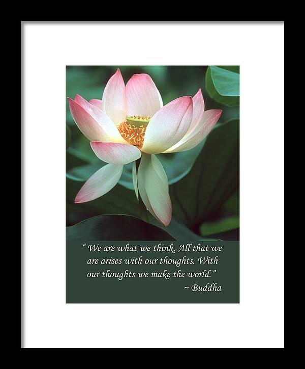 Lotus flower buddha quote framed print by chris scroggins lotus flower framed print featuring the photograph lotus flower buddha quote by chris scroggins mightylinksfo