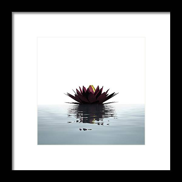 White Background Framed Print featuring the photograph Lotus Flower Floating On The Water by Artpartner-images