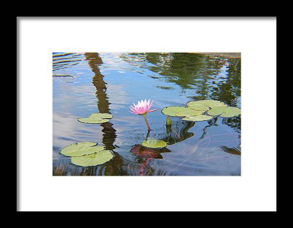 Flower Framed Print featuring the photograph Lotus Flower by Raquel Amaral