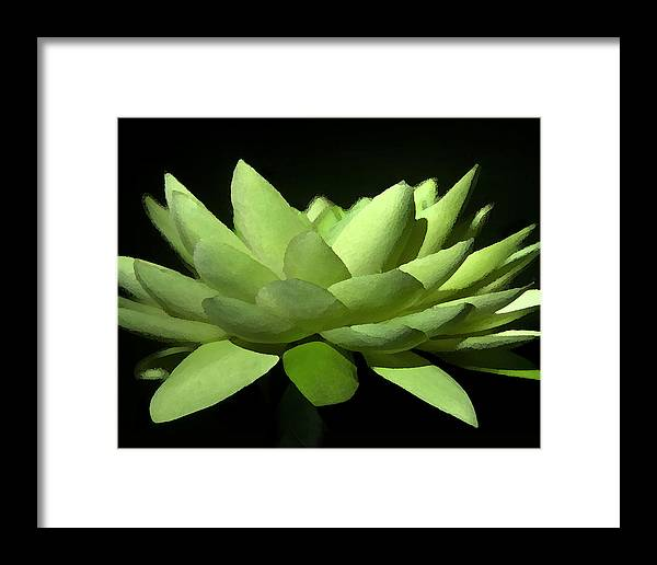 Floral Framed Print featuring the photograph Lotus Flower by Shannon Scott