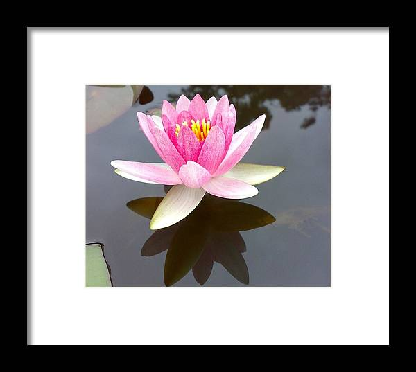 Lotus Framed Print featuring the digital art Lotus by Syed Suhaib Pasha