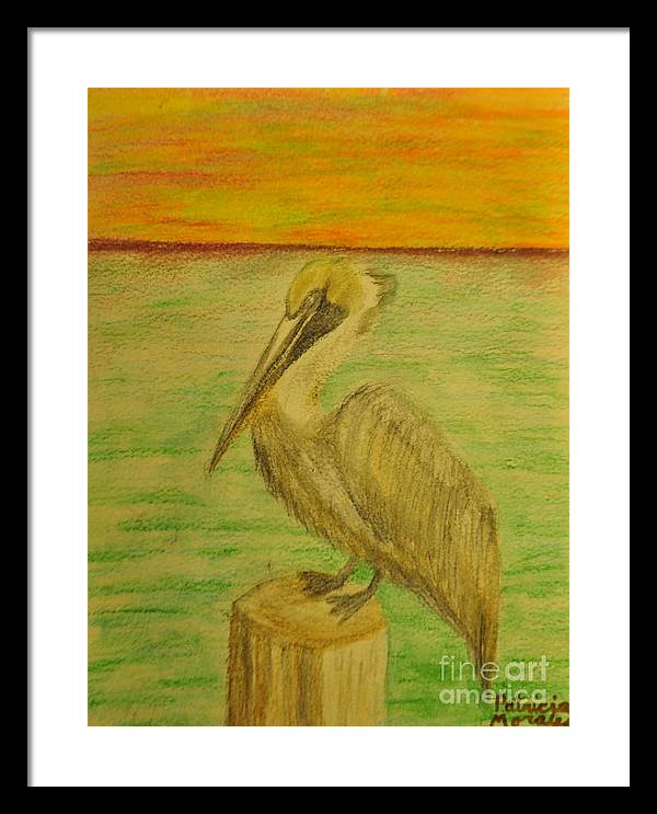 Pelican Framed Print featuring the drawing Louisiana State Bird by Patricia Morales
