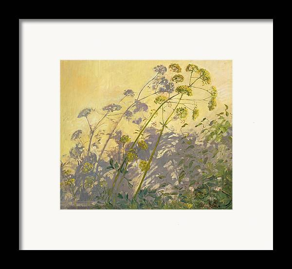 Shadow; Flower; Wild; Plant Framed Print featuring the painting Lovage Clematis And Shadows by Timothy Easton