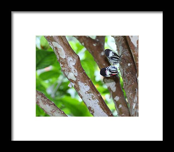 Butterfly Framed Print featuring the photograph Love by Chuck Hicks