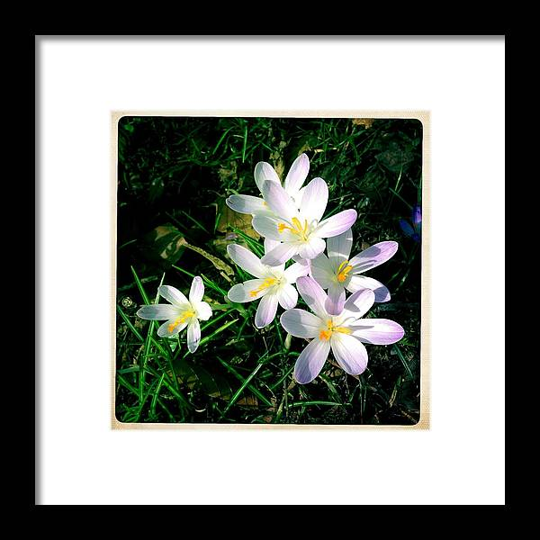 Flowers Framed Print featuring the photograph Lovely flowers in spring by Matthias Hauser