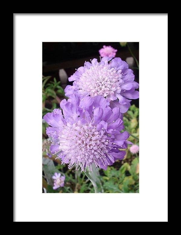 Purple Flower Framed Print featuring the photograph Lovely by Jennifer Dishon