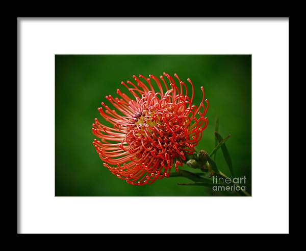 Loving The Color Orange Framed Print featuring the photograph Loving The Color Orange by Inspired Nature Photography Fine Art Photography