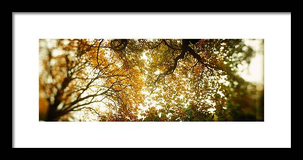 Photography Framed Print featuring the photograph Low Angle View Of Autumn Trees by Panoramic Images