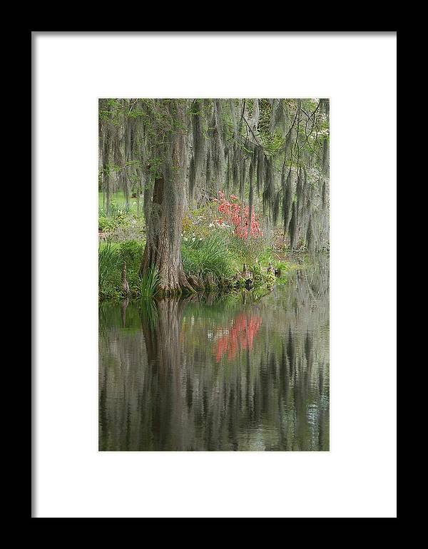 Lowcountry Framed Print featuring the photograph Lowcountry Series I by Suzanne Gaff