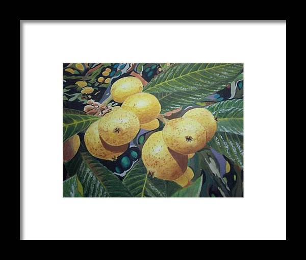 Fruit Framed Print featuring the painting Lowquats 2 by Hilda and Jose Garrancho