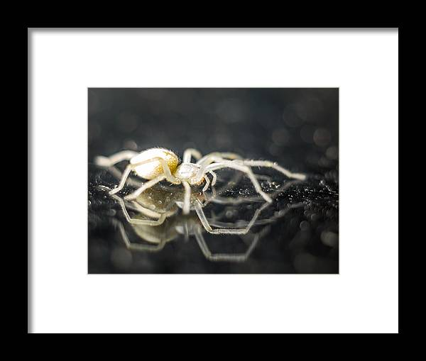 Spider Framed Print featuring the photograph Luminous Spider by Carl Engman
