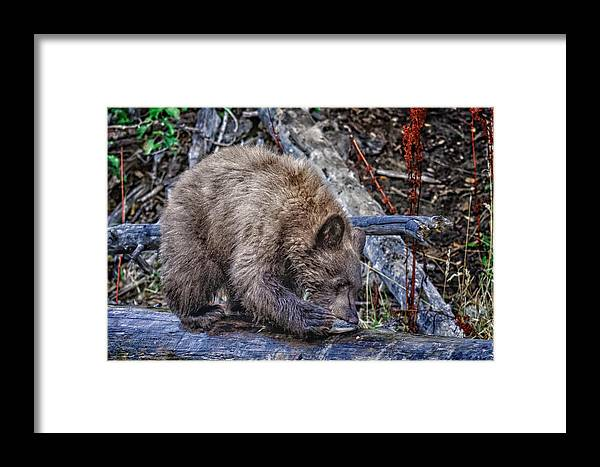Wildlife Framed Print featuring the photograph Lunch Break by Jim Thompson
