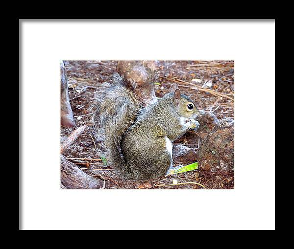 Squirrel Framed Print featuring the photograph Lunch Break by Jeannette Martir
