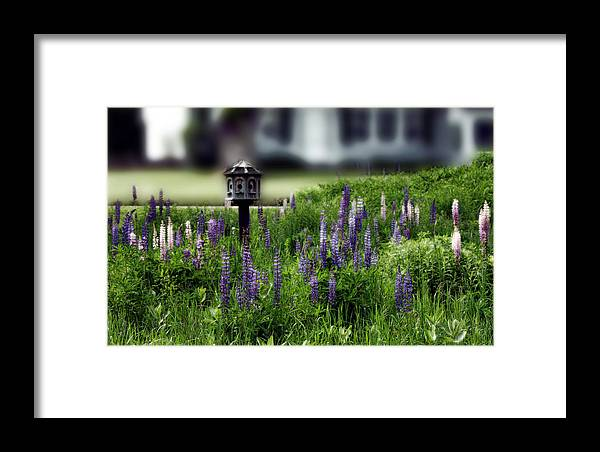 Birdhouse Framed Print featuring the photograph Lupine And Houses by Wayne King