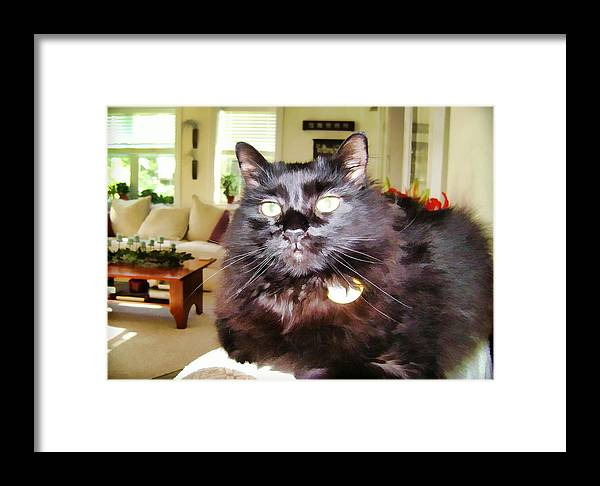 Cat Lura Leigh Kitty Black Framed Print featuring the photograph Lura Leigh Kitty by Alice Gipson