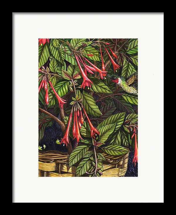 Fuchsia Framed Print featuring the painting Lurking by Catherine G McElroy