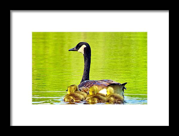 Bird Framed Print featuring the photograph Ma And Kids by Art Dingo