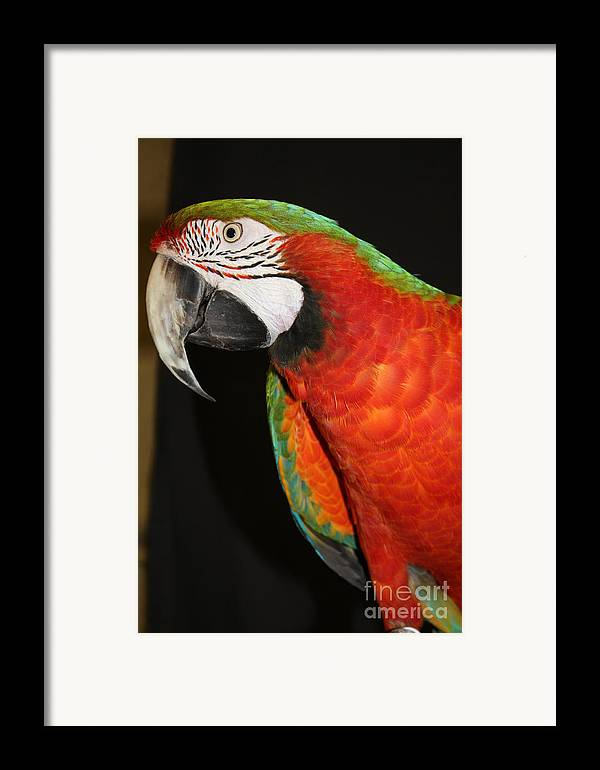 Macaw Profile Framed Print featuring the photograph Macaw Profile by John Telfer