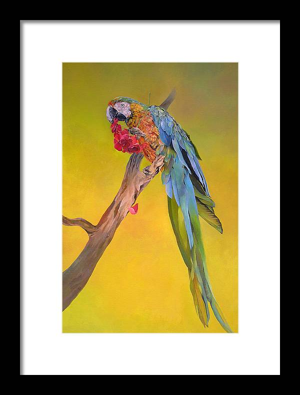 Tropical Bird Framed Print featuring the painting Macaw's Dream by Kathryn Alexander