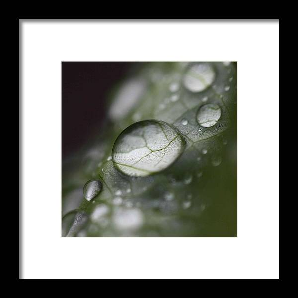 Leaf Framed Print featuring the photograph Macro Dew Drop by Aza Johnson