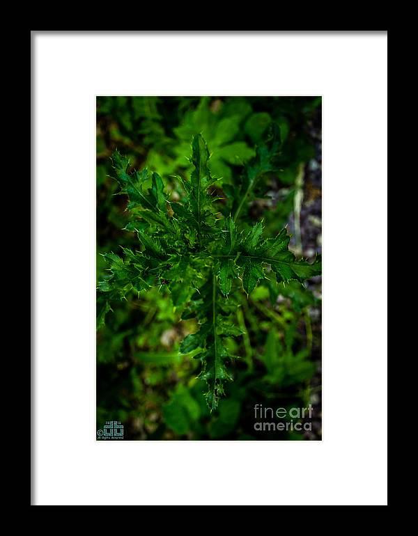 Macro Framed Print featuring the photograph Macro1 by Dheeraj B