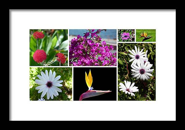 Madeira Framed Print featuring the photograph Madeiran Flower Collage by Lynn Bolt
