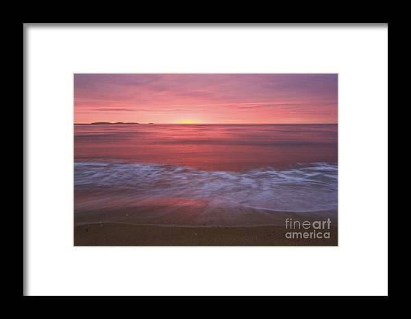 Pink Framed Print featuring the photograph Magenta Morning by Brenda Giasson