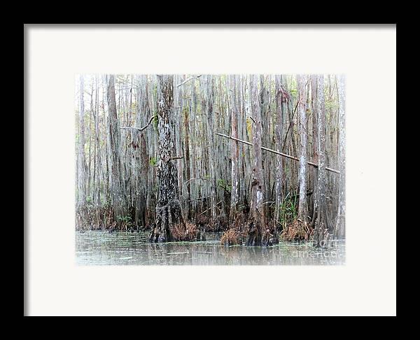Louisiana Framed Print featuring the photograph Magical Bayou by Carol Groenen