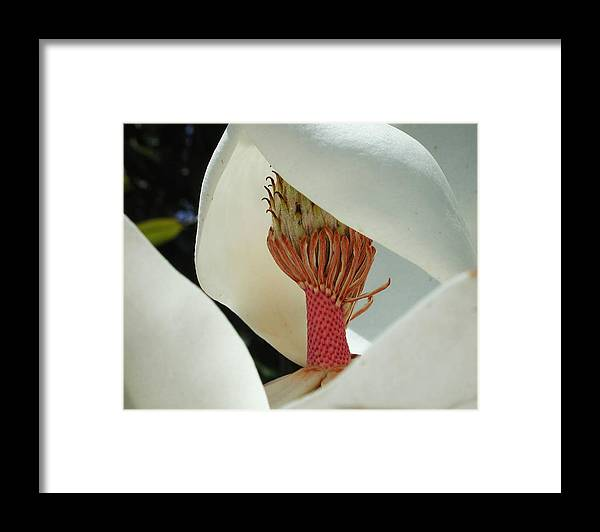 Magnolia Framed Print featuring the photograph Magnolia Nun by Leon Hollins III