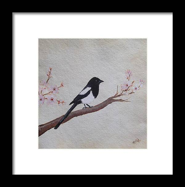 Magpies Art Framed Print featuring the painting Magpie On Cherryblossm Tree by Sheela Padmanabhan