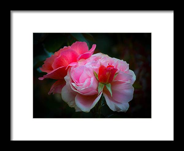 Pink Framed Print featuring the photograph Maiden Mother Crone by Patricia Babbitt