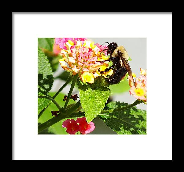 Bee Framed Print featuring the photograph Making Honey by Dennis Dugan