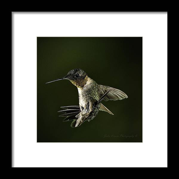 10.5mm Framed Print featuring the photograph Male Ruby Throat Humming Bird by John Kirwin