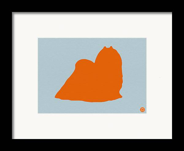 Maltese Framed Print featuring the photograph Maltese Orange by Naxart Studio