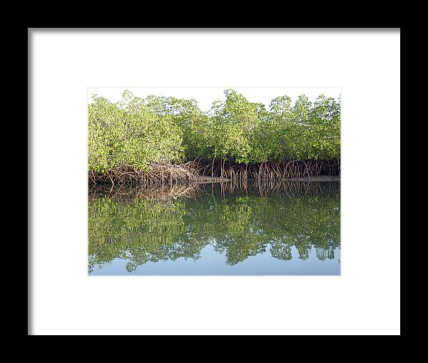 Mangrove Creek Framed Print featuring the photograph Mangrove Refelections by Tony Murtagh