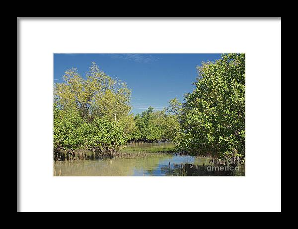 Africa Framed Print featuring the photograph mangroves in Madagascar 2 by Rudi Prott