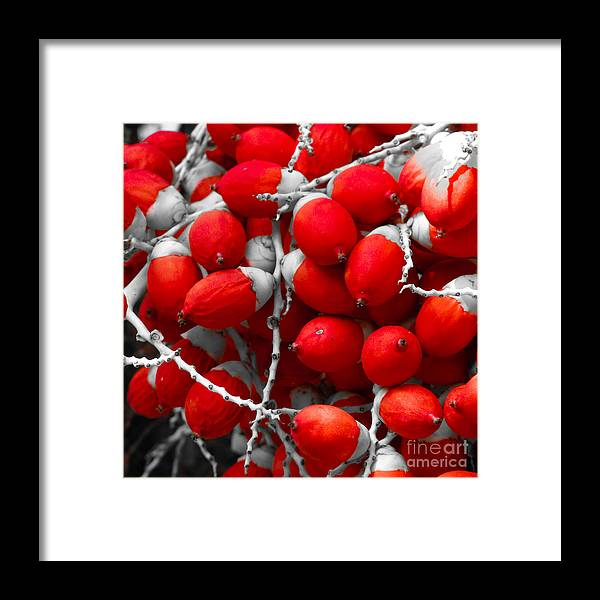 Attached Framed Print featuring the photograph Manila Palm Red by Inez Wijker