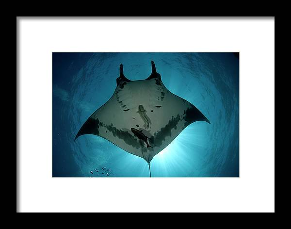 Latin America Framed Print featuring the photograph Manta Ray Of Revillagigedo by Luis Javier Sandoval