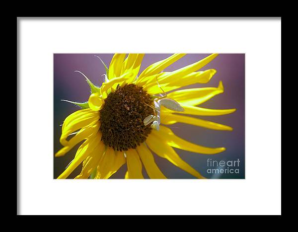 Framed Print featuring the photograph Mantis And The Flower by Joe Galura