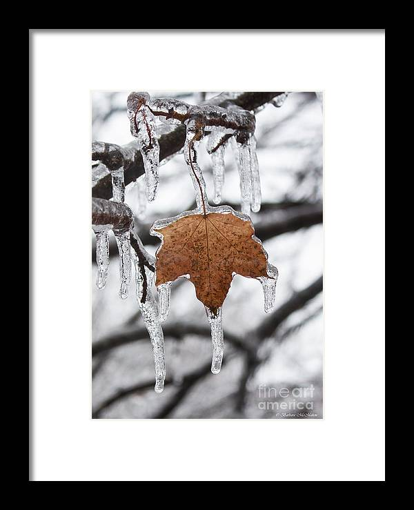 Maple Leaf Framed Print featuring the photograph Maple Leaf Forever by Barbara McMahon