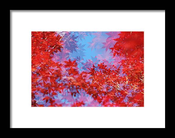 Leaf Framed Print featuring the photograph Maple Leaves by Catherine Lau