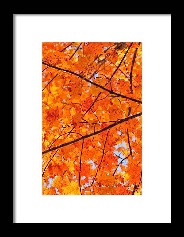 Maple Leaves Framed Print featuring the photograph Maple Leaves Orange Yellows 2879 by Marie Fierek