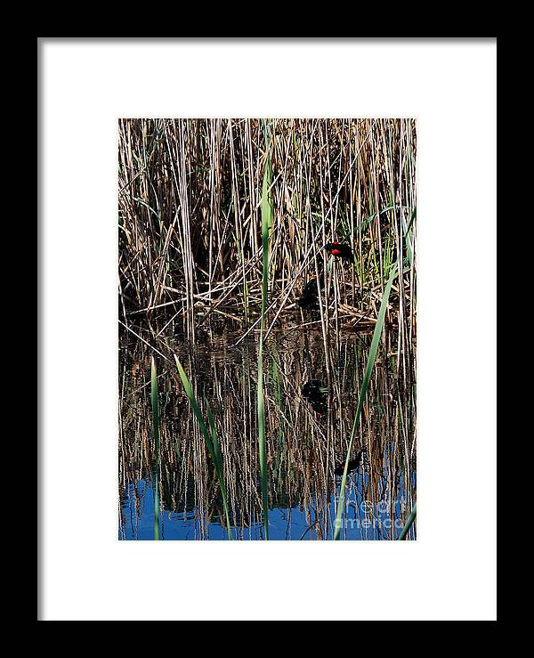 Framed Print featuring the photograph Marsh Dwellers by Skip Willits