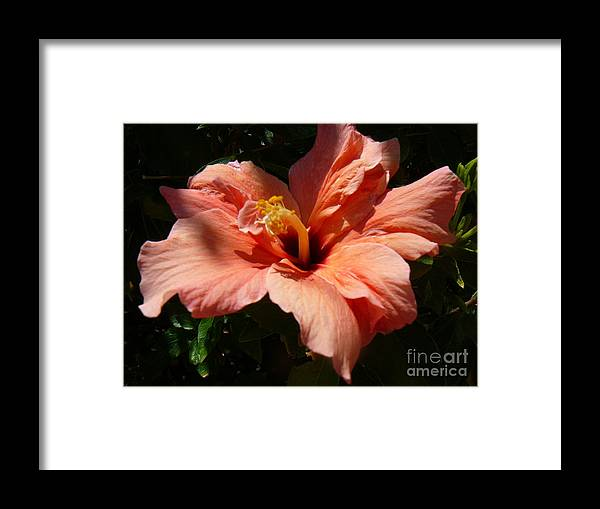 Hybiscus Framed Print featuring the photograph Angelina by Mary Brhel
