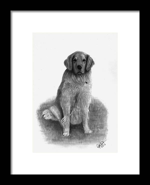 Dog Framed Print featuring the drawing Max by Chris Cox