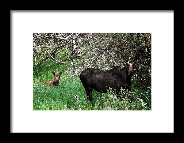 Moose Framed Print featuring the photograph Me And Mom by Susan Chesnut