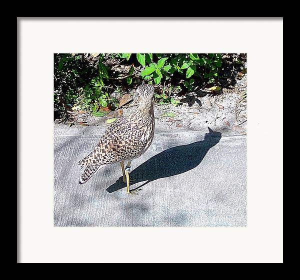 Birds Framed Print featuring the photograph Me And My Shadow by Heather Morris