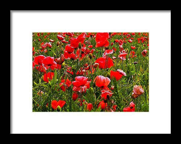 Red Framed Print featuring the photograph Meadow Flowers by Trevor Kersley
