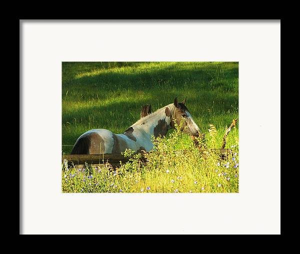 Horse Framed Print featuring the photograph Meet Me At The Fence by Feva Fotos